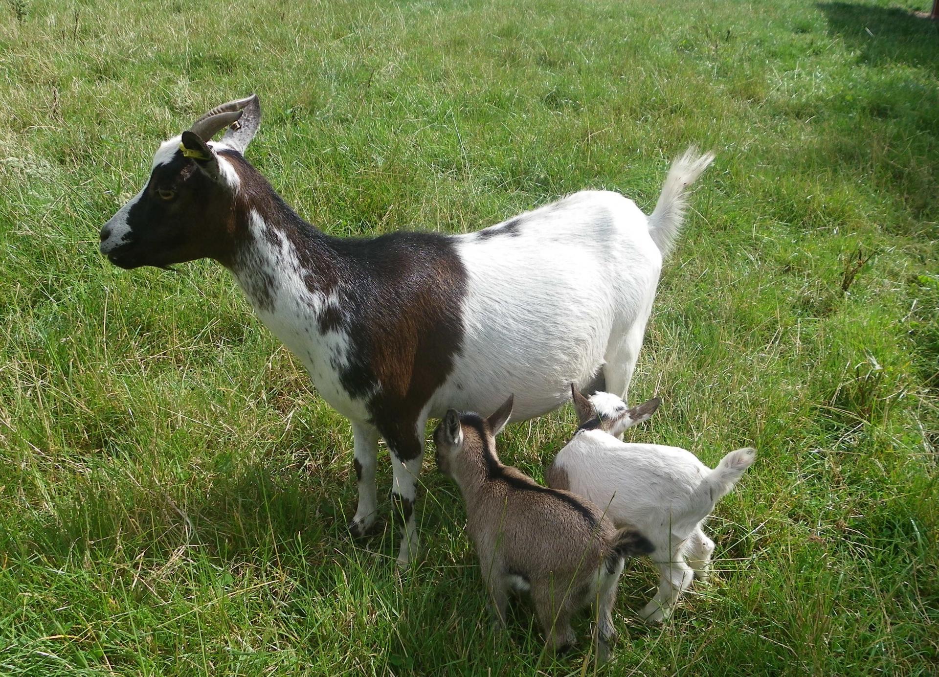 Chipie et ses petits